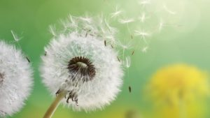 Uleiuri esentiale pt alergii